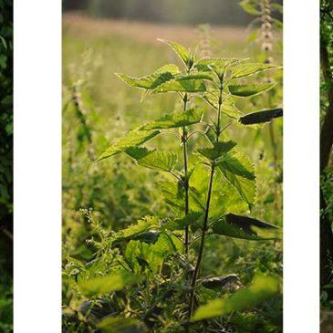 Słowiańska Natura – Czas Korzeni: Lato
